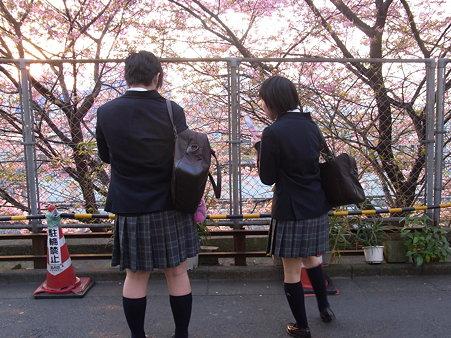 JKも桜でウキウキ