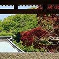 写真: 海蔵寺
