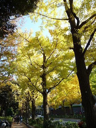 091123-山下公園通 (69)