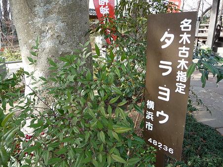 100120-4.徳善寺 (10)