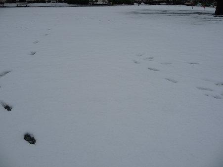 100202-雪(朝) (16)
