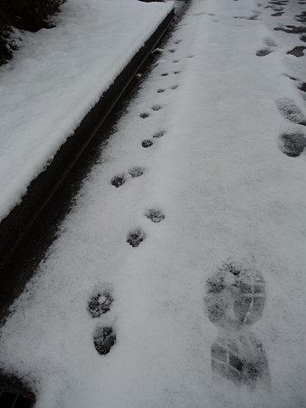 100202-雪(朝) (24)