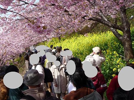 100223-松田山 河津桜 (32)