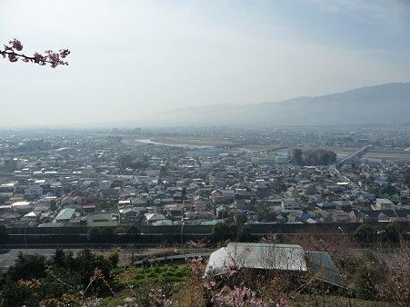 100223-松田山 河津桜 (37)