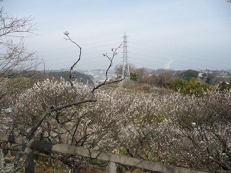 100301-田浦梅林 (29)