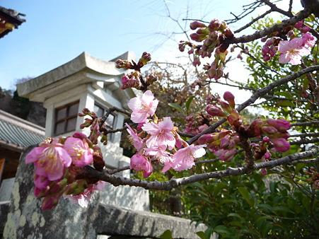 110225-鶴岡八幡宮 (46)