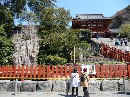 110406-八幡さま (25)