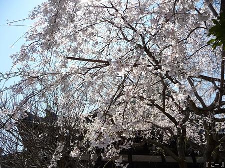 110406-本覚寺 (7)
