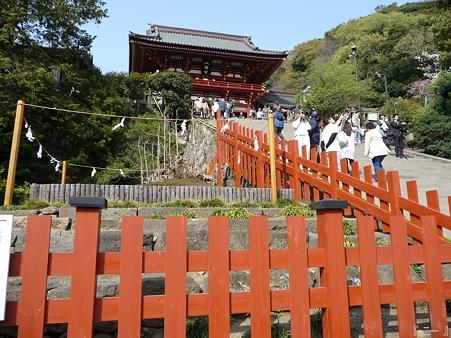 110411-八幡さま (5)