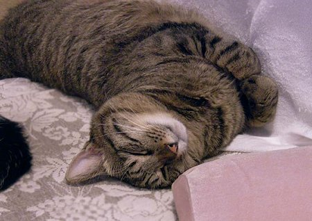 プ−ちゃんのひねり寝 拡大