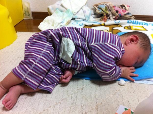 Photos: 寝てるゆーま