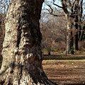 巨樹の森(3)