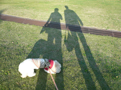 相模原公園で 影とくーかいと