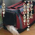 写真: 100503 くーかい of the day