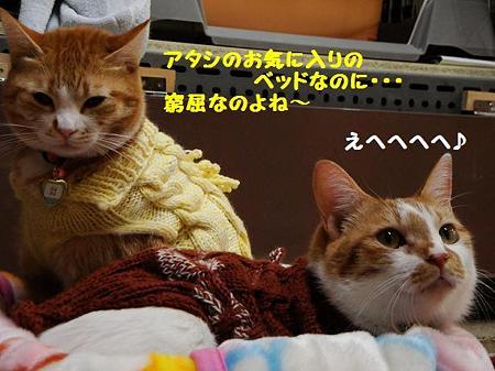 ぷるぷる&チャブ
