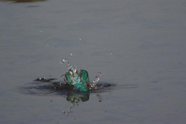 水中の格闘