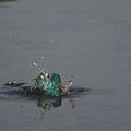 Photos: 水中の格闘