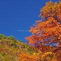 五家荘の秋