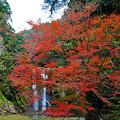 鵜の子滝と紅葉