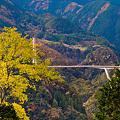 黄葉と鮎の瀬大橋