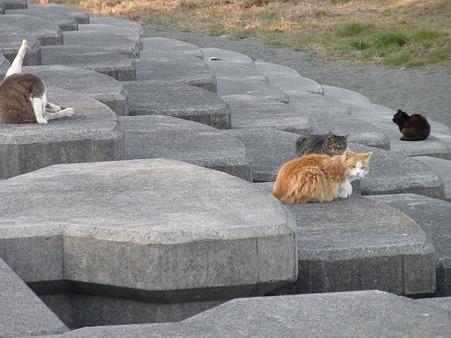 野良猫 散歩道 (4)
