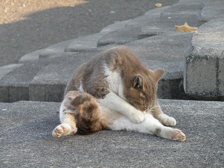 野良猫 散歩道 (1)