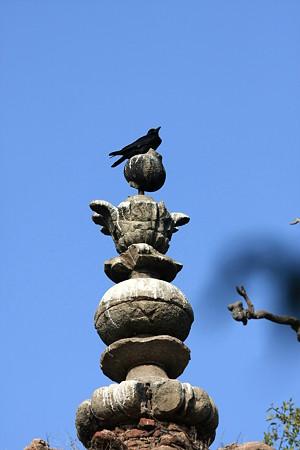 2010.02.02 オルチャ遺跡 ラームラジャ寺院 塔に烏