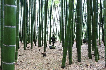 2010.03.05 鎌倉 報国寺 石灯籠