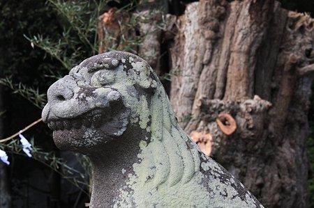 2010.03.19 鎌倉八幡宮 狛犬と大銀杏