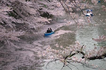 2011.04.11 皇居 北の丸公園 千鳥ヶ淵-6