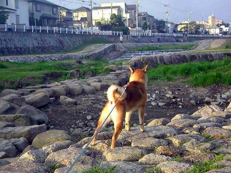 向こう岸は犬祭り