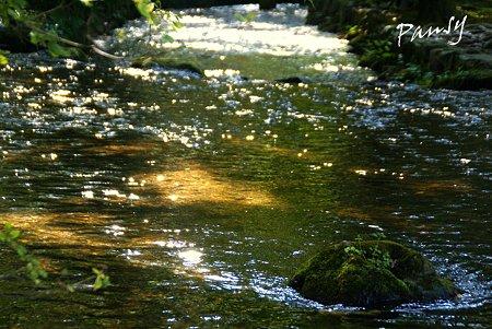 御手洗川のきらめき・・