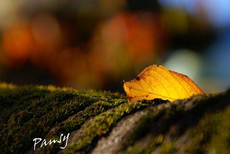 晩秋の光・・