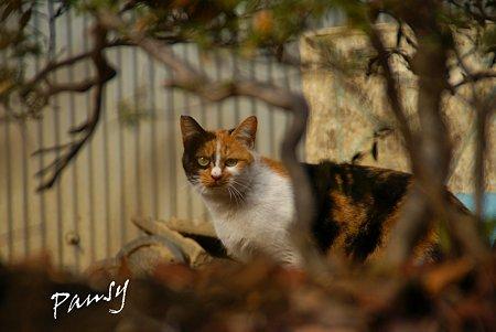 弘明寺の猫さん。。