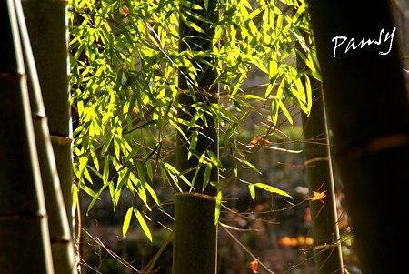 竹の葉に冬の光・・