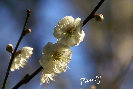 重なる花弁・・