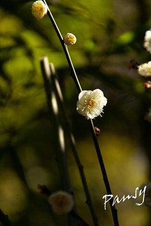 早春の三渓園・・5