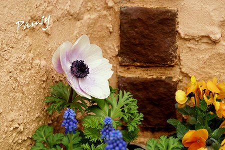 春花壇・・