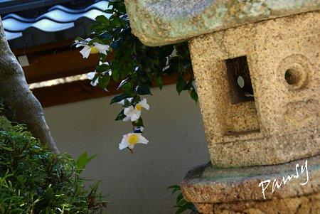 山茶花と・・石灯篭と・・