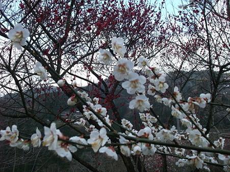 2010年2月28日美郷重楽寺05