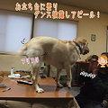 Photos: 最後の手段!
