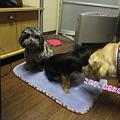 Photos: 昨日とは別犬