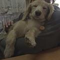 Photos: 仔犬顔のTO-Y