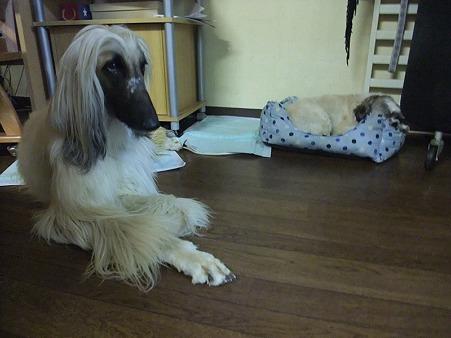 保護犬チーム