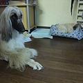 Photos: 保護犬チーム