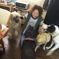 Photos: 犬に囲まれる