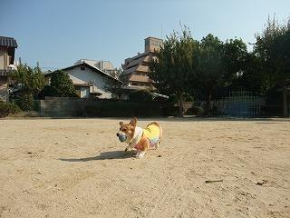 2009_1106朝の散歩0007