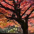 写真: 紅葉の東慶寺!(091128)
