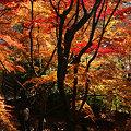 Photos: 紅葉の参道を上から!(091130)