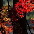 写真: 紅葉の姿光明寺!(091130)